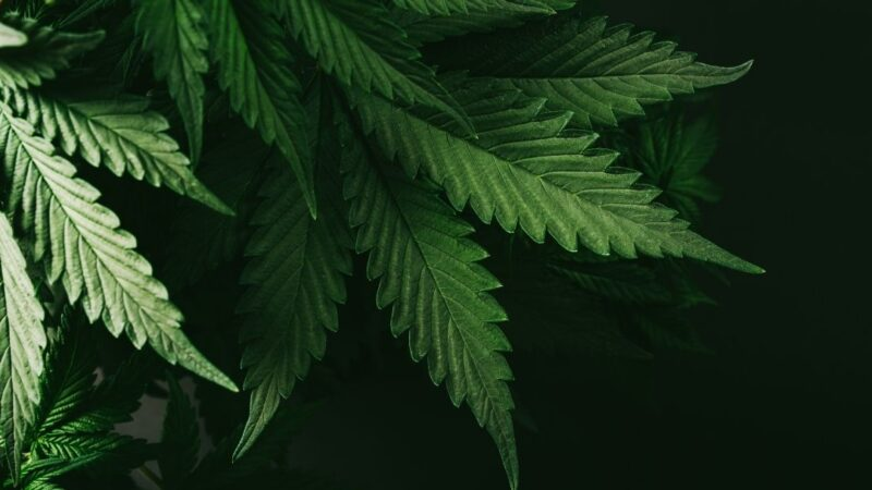 Effects And Things To Consider – Marijuana