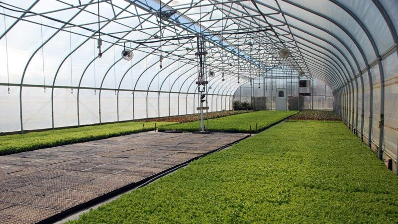 6 Major Varieties Of Structures In The Greenhouses Used In The Production Of Crop