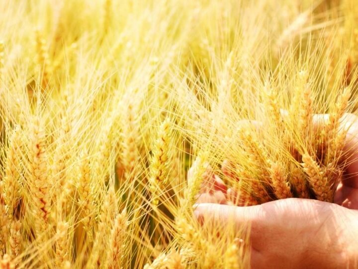 Yield Farming: How it Differs from Staking