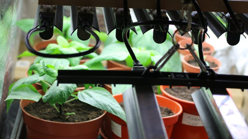 Growing Plants Hydroponically can be a Tricky Experience